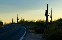 Tucson, AZ (- Adam Reeder -) Tags: carmirror maze snowplow trailertruck y2018 m06 d06 lat320 lon1110 the reserve saguaro park pima arizona united states photo jpg apple iphone x tucson az pole hay tank freightcar tractor cab tree sky
