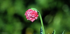 J78A0736 (M0JRA) Tags: flowers plants walks birds woods weeds gardens forest fields