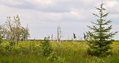 Hochmoor / Hill moor # 3 (schreibtnix on 'n off) Tags: reisen travelling belgien belgium nature landschaft landscape hohesvenn hochmoor hillmoor strukturen structures olympuse5 schreibtnix