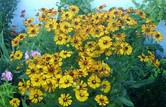 "Flowers, flowers, flowers!!! (Uhlenhorst) Tags: 2018 germany deutschland bavaria bayern plants pflanzen flowers blumen blossoms blüten ngc npc ""doublefantasy"""