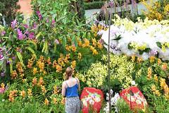 Orchid Extravaganza (chooyutshing) Tags: orchidextravaganza floraldisplay flowerdome gardensbythebay baysouth marinabay singapore
