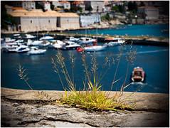 The Dubrovnik Impressions (kurtwolf303) Tags: 2018 boote dubrovnik gras kroatien stadt alterhafen croatia harbor water wasser boats mft kurtwolf303 meer hrvatska olympusem1 omd microfourthirds micro43 mirrorlesscamera harbour pov hafen grass