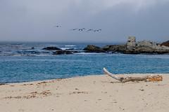 Fuji-X-E3-DSCF1286-20180720 (Drew Saunders) Tags: beach bird california carmel carmelriverstatebeach carmelbythesea ocean pelican seabird