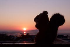 New day.  New nuts. (ColmDub) Tags: squirrel teddy nuts dawn dublinbay silhouette sunrise