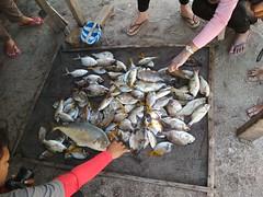 ikan Gili Labak (Explore Madura) Tags: menumakan gililabak opentrip madura sumenep jawatimur