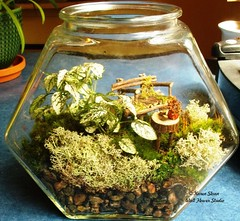 Container Fairy Garden (Karen @ Wall Flower Studio) Tags: wallflowerstudio fairygarden terrarium fairyfurniture miniaturegarden glass garden handmade plants moss lichen shells rocks weefolk faeryfolk bench table twigs