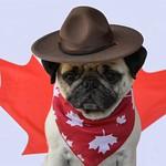 Happy Canada Day! thumbnail