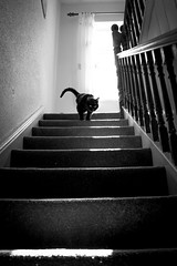 beast descending (Chilanga Cement) Tags: fuji fujix100f fujifilm xseries x100f 100f bw blackandwhite monochrome cat cats catsofflickr