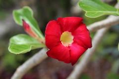 IMG_8325 (Usagi93190) Tags: macro proxi flower close up nature outdoors plant botanical gardens south florida naples