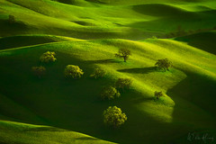 Oak Pasture (Willie Huang Photo) Tags: hills california green spring oaks trees rollinghills light shadow rustic landscape nature scenic