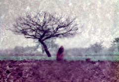 There Was An Old Woman Who Lived With A Tree (amarcord108) Tags: amarcord108 france 1961 experimentalcolorphotography analog 35mm darkroom colorprintthroughtracingpaper