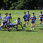 Petersham u8_8