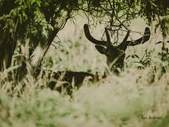 _DSC3443.jpg (fotolasse) Tags: sonyölandormvråkfåglar öland natur kalmar ottenby långejan fyr canon sony bird birds fåglar vatten hav water sea sweden sverige