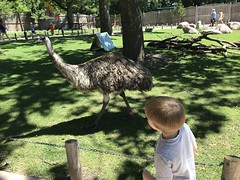 "Paul Watches an Emu • <a style=""font-size:0.8em;"" href=""http://www.flickr.com/photos/109120354@N07/43548945201/"" target=""_blank"">View on Flickr</a>"