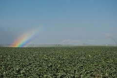 Rainbow In The Mist (ACEZandEIGHTZ) Tags: rainbow nikon d3200 mist field agriculture farmland summer crops