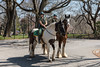 New York City Parks Enforcement Patrol (Robert Wash) Tags: newyork ny newyorkcity nyc manhattan centralpark newyorkcityparksenforcementpatrol parksenforcementpatrol pep horses
