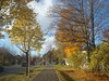My way to work. Autumn. (Ievinya) Tags: autumn pathway trotuārs ietve ceļš koki trees tree fall ainava landscape way yellow orrange ulbroka stopiņi stopini