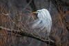 MysticAngel (jmishefske) Tags: 2018 d850 nikon lagoon egret wisconsin great bird park milwaukee pond county april