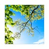 Spring (madras91) Tags: colors spring leaf tree park greenery treetrunk foliage leica leicam mtyp240 m240 summilux50mmf14asph summilux 50mm vivid