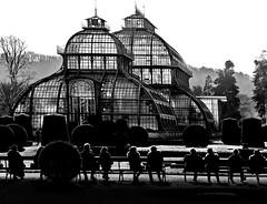 palm house vienna (heinzkren) Tags: schwarzweis blackandwhite bw sw monochrome panasonic lumix wien schönbrunn palmenhaus garden park people personen iron glass street streetphotography candid architektur architecture glashaus constuktion silhouette urban austria
