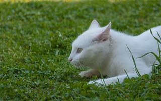 Katty (07)