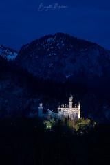 Schloss Neuschwanstein (gitterosa) Tags: blauestunde schlösser füssen schlossneuschwanstein bauten natur landschaft