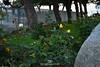 Sant Jordi 2018 (Ariadna Escoda) Tags: canalreus canalreustv canalreustelevisió catalan catalans catalunya diada flickr jordi mercadal nikon5200 people reus tgn tv tarragona april broadcasting cambrils comunicació crowd crowded cultura culture cute departamenttècni departamenttècnic escriptors festa george history història journalism journalists llibre mar marmediterrani natural paradetes patrimoni periodisme periodistes primavera rosa rosaillibre santjordi santjordi2018 television televisió tradicion tradició tradition tècnics òmnium òmniumcultural nens children portait portaits plaça cavallers cavaller