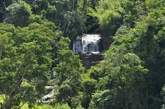Brilhando na mata (Márcia Valle) Tags: interiordobrasil santanadodeserto natureza nature brasil outono autumn green verde trees árvores mataatlântica márciavalle nikon d5100 waterfall cachoeira