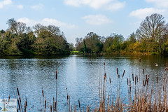 OstPrk_DSC8756 (Nick Woods Photography) Tags: water waterscape waterreflections waterscene landscape trees treereflections freshwater pond pondscene lake lakescene rushes bullrushes sunny sunshine nt nationaltrust nationaltrustosterleypark osterleypark osterley