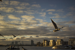 Flying the Thames (J.Meilán) Tags: london greenwich canon eos550d sunset birds sky clouds gold thames river 2013
