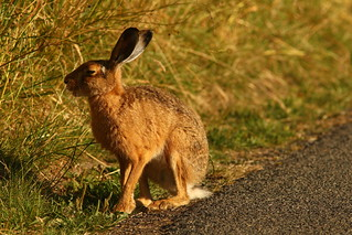 Interview with Mr Hare