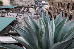Ciudad de México (pslachevsky) Tags: ciudaddeméxico lanzamiento mexique museodeltemplomayor méxico zócalo agave restauranteelmayor