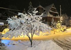 Zakopane-November'17 (14) (Silvia Inacio) Tags: zakopane poland polónia polska night noite snow neve house casa tree árvore