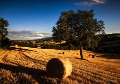 Sunset colors (Luca-Anconetani) Tags: fields rural country luceradente lucieombre wheatfield natura colorsofnature lucaanconetani regionemarche lemarche paesaggimaceratesi italy nikon landscapes campagna