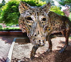 Wolf Pack (Philip Osborne Photography) Tags: ncstate statues campus metal sculpture