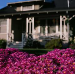 Santa Clara (bior) Tags: 120 mediumformat hasselblad500cm provia provia100f fujifilmprovia slidefilm 6x6cm santaclara square house home suburbs
