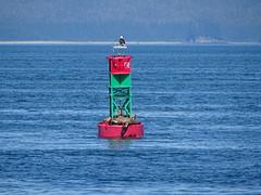 DSC03596 (jrucker94) Tags: juneau alaska cruise cruiseport eagle seal seals buoy ocean inlet red green