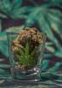 (Theresa Best) Tags: stoner 420 photography pot potography weed marajuana maryjane shotglass bokeh plant canon canon760d canont6s canon8000d theresabest