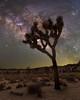 Milk of Life (RyanLunaPhotography) Tags: canon joshuatree astroscape cactus ioptron milkyway night stars