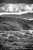 Reaching up (Alberto Vanoli) Tags: map tree landscape bw bayarea photo clouds