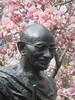 Gandhi With Magnolias II (edenpictures) Tags: unionsquarepark spring flowers blossoms floweringtrees newyorkcity manhattan nyc statue sculpture mahatmagandhi