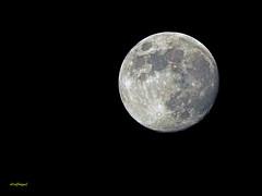 La Luna hoy 26 Junio 2018 Luna creciente (6) (eb3alfmiguel) Tags: astronomía satelite la luna hoy 26 junio 2018 creciente