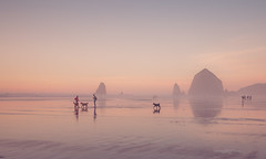 foggy beach scene (imagebyTerri) Tags: cannonbeach oregon coast haystackrock seastacks rockformations fog sunset beach reflections water ocean sky dogs people surreal blue orange pink canon imagebyterri pacific northwest