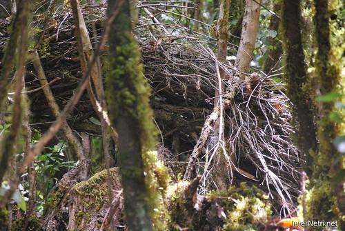 Національний парк Гарахонай, Гомера, Канарські острови  InterNetri  0728