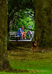 Solitude (Robica Photography) Tags: robicaphotography streetphotography straatfotografie streetart tilburg man d3200 bicycle tree grass bench park dog