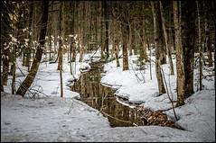La fonte des neiges en forêt / Snow melting in the forest (Jeanluc Verville) Tags: neige snow