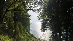 Empyreal (Giorgi Natsvlishvili) Tags: adjara georgia batumibotanicalgarden batumi botanicalgarden sea blacksea blackseacoast forest landscape landscapephotography travel travelphotography photography panorama pano