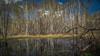 Springtime in the birch wood - Frühling im Birkenwald (ralfkai41) Tags: wood spring warter nature birken outdoor waterreflection wald natur woodland trees wasserspiegelung forest birches spiegelung reflection mirroring reflektion bäume wasser frühling