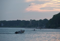 early birds (humbletree) Tags: madisonwisconsin morninglight rowing lakemendota