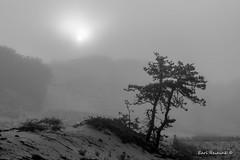 Sunrise - Cape Cod (Earl Reinink) Tags: nature outside outdoors woods monochrome landscape sun light sunrish sunset trees mist fog sand earl reinink earlreinink deitdtrdza